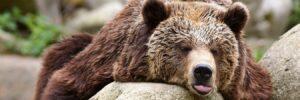 Niedźwiedź - misie tosą wlesie